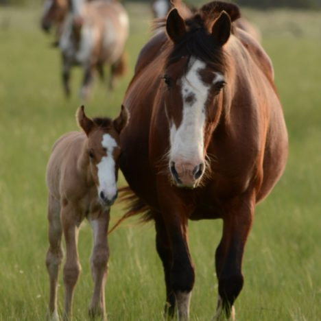 Stages of Foaling