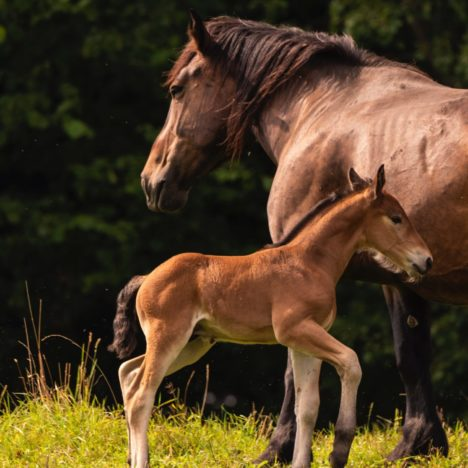 Mare Nutrition and its Impact on Fetal Development