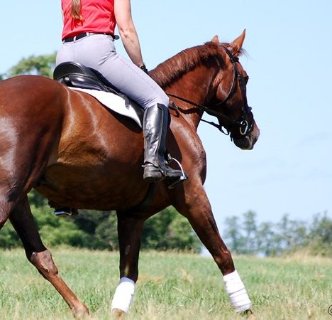 Develop the Canter: Strengthen the Transition
