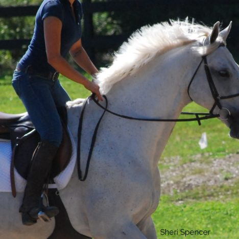 Saddle fit & the Horse's Back
