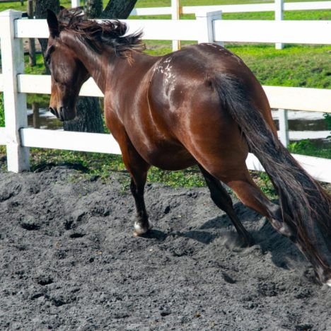 Reasons and Remedies for the Hollow-Backed Horse