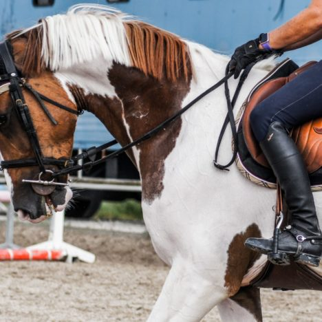 A look at the Dressage Training Scale
